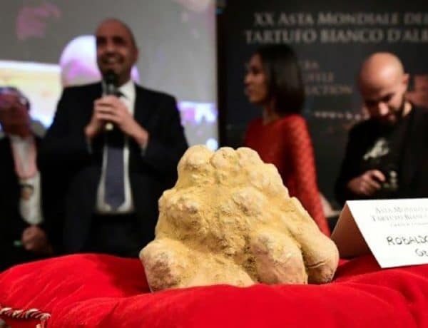 Une truffe blanche d'un kilo adjugée 120.000 euros.